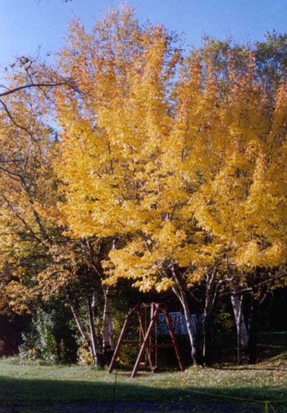 Autumn colors in Clode Sound Motel's backyard are always a sight to see.